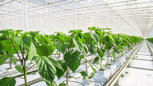 greenhouses_thumb